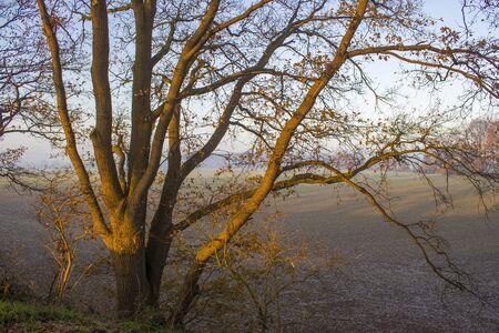 tree on a field - sunny autumn morning, Germany