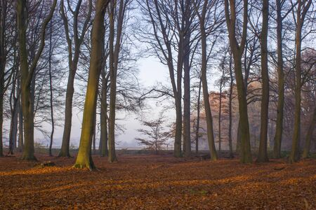 forest in autumn - foggy morning Banco de Imagens