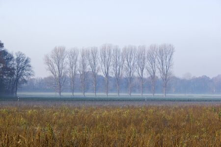 autumn field with trees - foggy morning