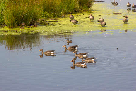 Krickenbecker Lakes, Narure Reserve, Lower Rhine Region, Germany