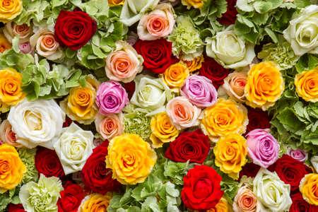 roses background - close up 版權商用圖片