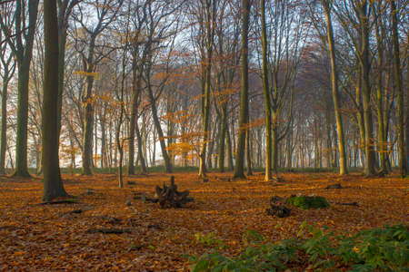 forest in autumn - foggy morning 版權商用圖片