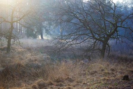 winter nature landscape - foggy forest - Brachter Wald in Germany