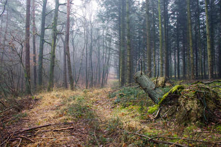 winter nature landscape - winter forest - Brachter Wald in Germany
