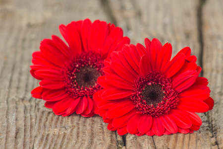 red gerbera flowers on wooden background