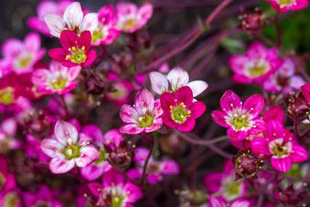 Lovely tiny pink flowers. Soft focus photo Standard-Bild