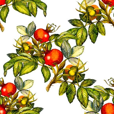 Modelo inconsútil de la rosa mosqueta en el fondo blanco, ilustración dibujados a mano acuarela, diseño de la tela, textil, papel de regalo, tarjeta, invitación, papel pintado, diseño de páginas web.