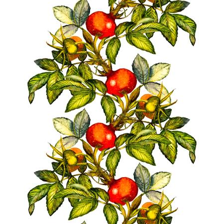 Rosa mosqueta frontera patrón sin fisuras en el fondo blanco, pintado a mano ejemplo de la acuarela, diseño de la tela, textil, papel de regalo, tarjeta, invitación, papel pintado, diseño de páginas web.