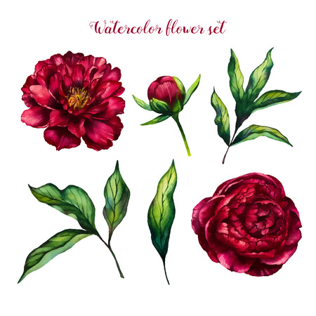 Kwiatowiec akwarela kwiat piwonia, kwiaty i liści piwonii, akwarela róża wyizolowanych na białym tle, zestaw kwiatowy, projekt wektora na zaproszenie, wesele, zapisać datę, kartkę, wakacje, projekt lato