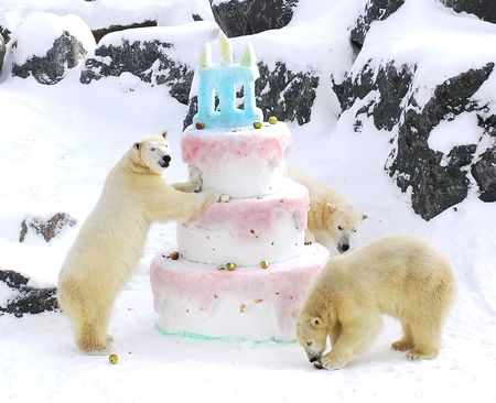 Three polar bears celebrating their birthday with a giant cake made of snow fruits and fish photo