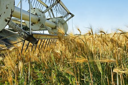 agriculture industry: Old combine harvester stopped in a beautiful ripe golden barley field crop wainting to be harvested.