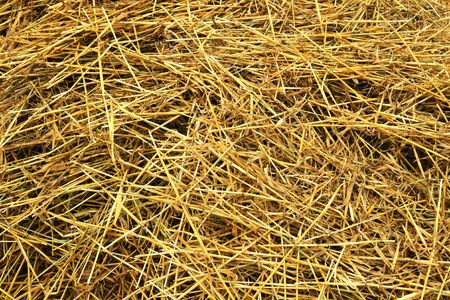 Close-up of freshly cut hay,great texture . photo