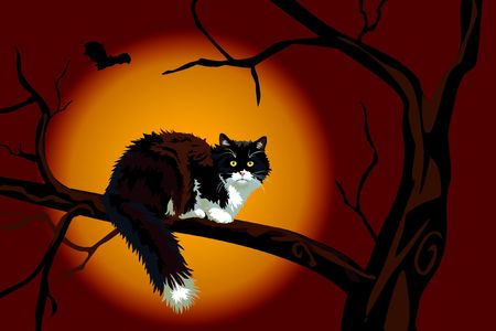calico cat: Halloween realistic calico black and white cat on a large branch up a tree looking at you. Scary.