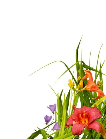 fuschia: Beautiful natural arrangement of flowers, capicunes and lilies, isolated on white background to make perfet floral border, corner.