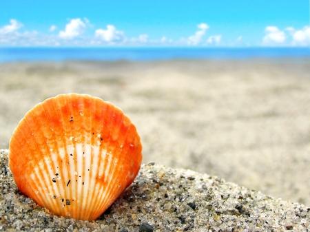 熱帯のビーチの美しい砂の簡単なオレンジ シェル。旅行や休暇に最適です。