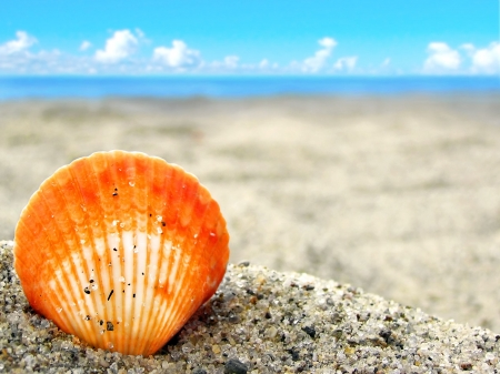 petoncle: A simple orange shell in the beautiful sand of a tropical beach. Perfect for vacations and travel.