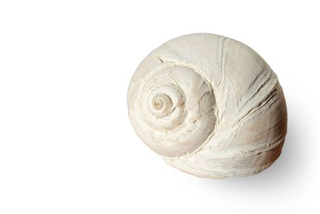 Low key faded large snail shell close up isolated on white with pale shadow.Great for spa, bathroom and travel concept.