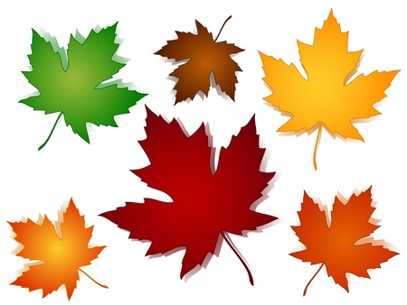 Maple leaves in a variety of autumn or fall colors with shadows