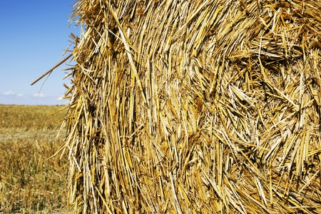 cilinder: Great close-upl of large round hay or straw bale with lots of details and texture.