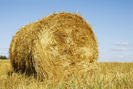 cilinder: Big round hay or straw bale with copy space in the blue sky.