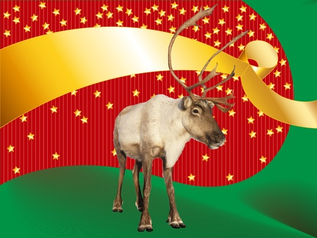 caribou: Fun Christmas or Holiday card or others with a complete reindeer or caribou on funky red and green background with gold stars and ribbon for your text.