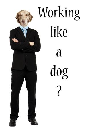 full strenght: Funny composite of the body of a young man in business suit with arms crossed with the head of a brown spotted dog with text Working like a dog. Stock Photo