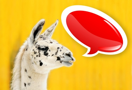 Funny face alpaca (lama) over bright yellow background with glossy red speech bubble, ready for your text or advertisement, perfect for card. photo