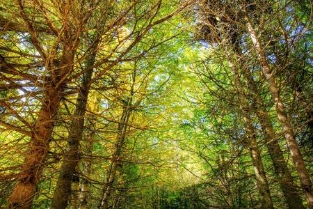Dramatische HDR-Rendering eines schönen dichten Wald mit hohen Bäumen und Himmel, schön das Clearing und die helleren Bereich in der Mitte, große Natur Hintergrund. Standard-Bild - 13595131
