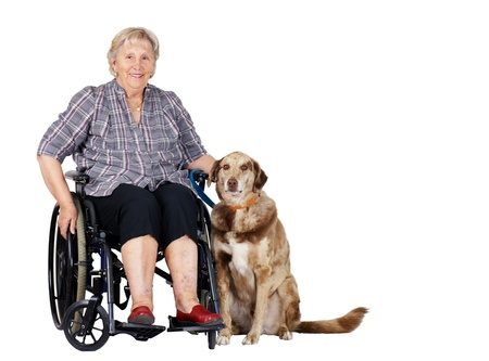 Happy senior woman in wheelchair with her big dog, great for zootherapy, guiding dogs or other health or medical issues  Stock Photo