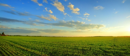 Magnificent panorama of  a sunrise over a newly planted cereal field- beautiful nature, dramatic HDR rendering. photo