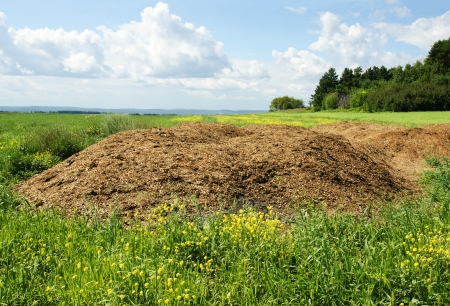 muck: Agriculture concept: Chicken dung hill or manure heap dumped in the field ready to be spread out, great compost plant fertilizer.