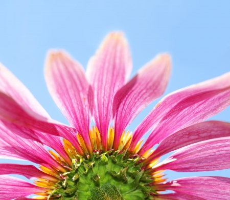 vue: Fun artistic different point of vue of a beautiful medicinal coneflower, Echinacea purpurea, with its bright pink petals, orange core and green stem agains the blue sky. Stock Photo