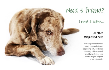 Cute but shy funny looking mutt dog, perfect for pet shelter or rescue and adoption programs. Stock Photo - 16901368