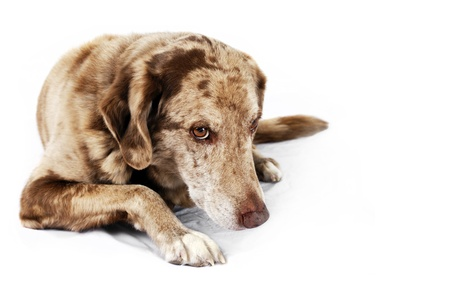 Cute but shy funny looking mutt dog, perfect for pet shelter or rescue and adoption programs. Stock Photo - 16901361