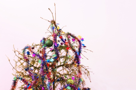 dead trees: End of the holidays or other concept: dead fir Christmas tree with dried up needles; star garland and ornaments left in the tree.