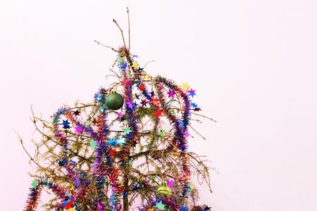 arboles secos: Fin de las vacaciones u otro concepto: dead abeto árbol de Navidad con las agujas secó; guirnaldas y adornos de estrellas que quedan en el árbol. Foto de archivo