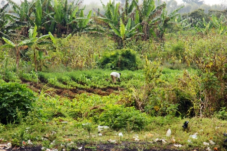 waste management: Agriculture or agroforesty in Africa, with a worker in the fields, banana trees in the foreground, garden in the middle and plastic garbage in the forefront, developing country and waste management concept. Stock Photo
