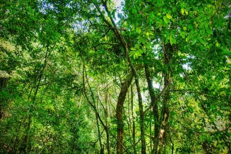 Sacred African rainforest, tropical jungle.