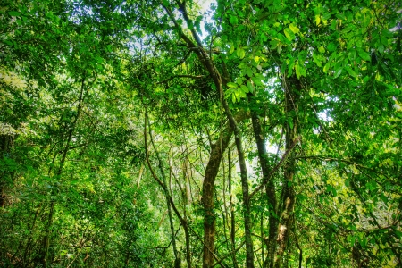 hdr background: Sacred African rainforest, tropical jungle.