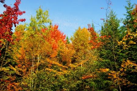 landscape: Beautiful fall or autumn forest landscape.