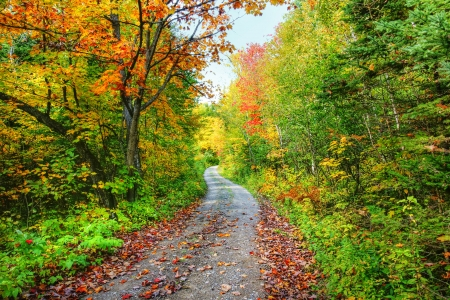 boreal: Road in the beautiful forest and colorful trees of fall.