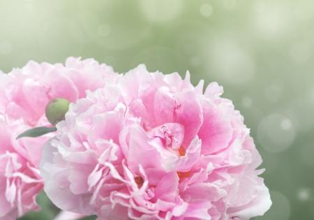 Mooie dromerige bloemen achtergrond met roze pioen bloemen, bokeh en lichteffecten.