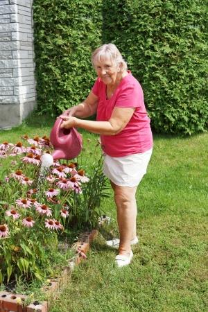 Smiling senior woman watering her echinacea flowers  photo