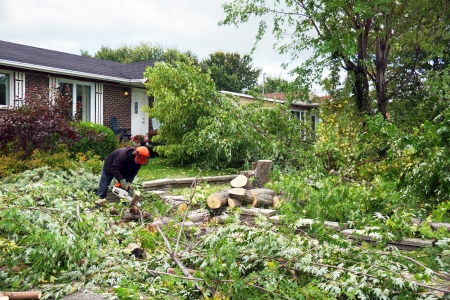 pruning: Professional worker cutting down a large tree in front yard
