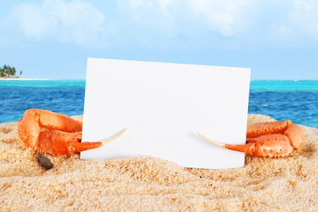 Fun vacation or holiday concept, c rab claws holding blank business card at the beach
