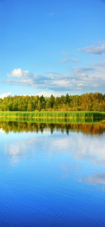 xxxl: Vertical panorama (XXXL) of wetland with cattail and forest at the back, great nature background or border Stock Photo