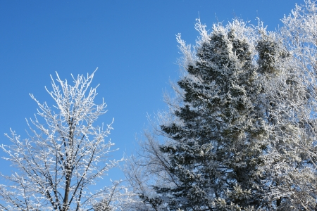 Frozen trees covered in snow on beautiful winter day with blue sky photo