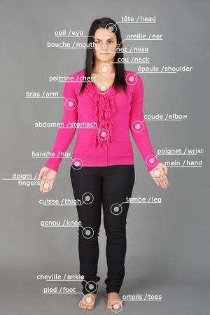 Menschliche Anatomie oder Körper: Frau posiert auf grau mit Französisch und Englisch Wörter Standard-Bild - 25704065