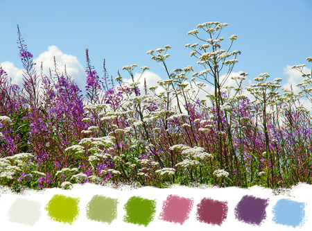 valerian: Beautiful purple fireweed and white valerian wildflowers color palette Stock Photo