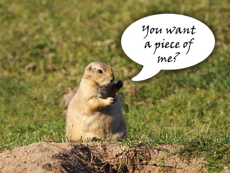 prairie dog: Funny black-tailed prairie dog looking for a fight with fists up in the air, speech bubble Stock Photo